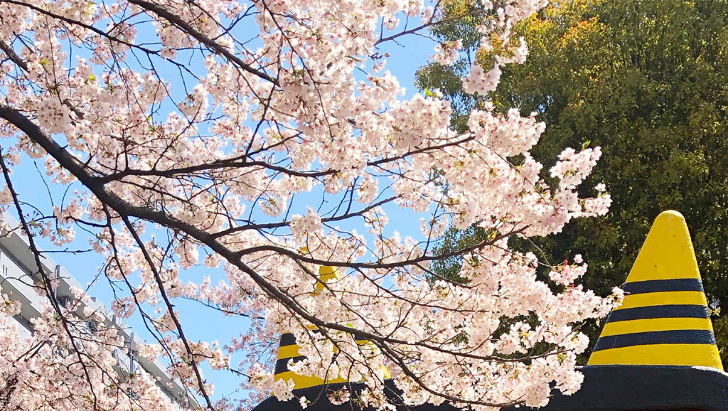 【Instagram】花見をする鬼