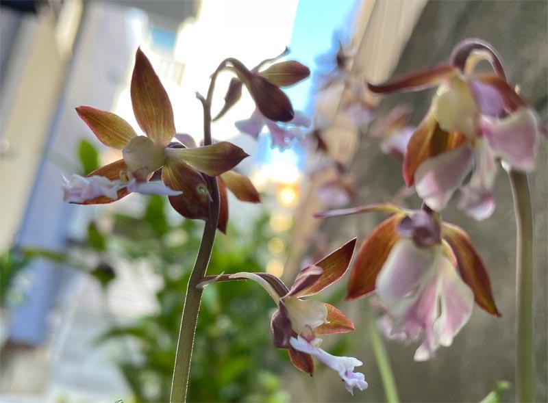 我が家の花を楽しむステイホーム
